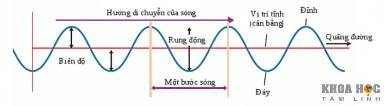 875-tim-hieu-ve-tan-so-rung-dong-1.jpg